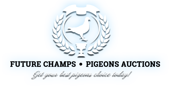 Future Champs - Pigeons Auctions. Get your best racing pigeons choice today!